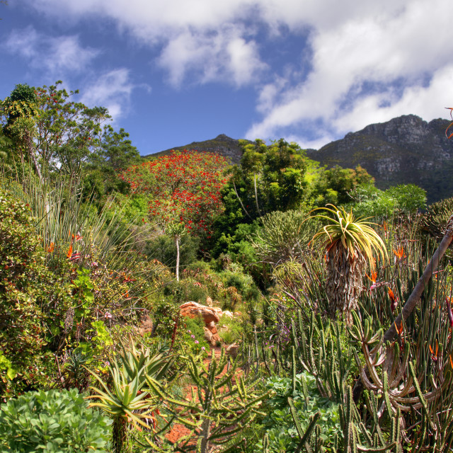 """Kirstenbosch National Botanical Gardens 3"" stock image"