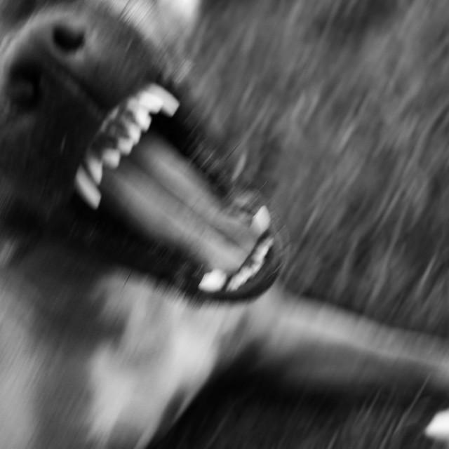 """""""Anger dog"""" stock image"""