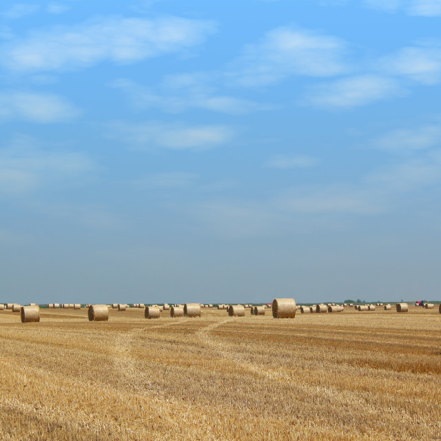 """field with straw bales"" stock image"