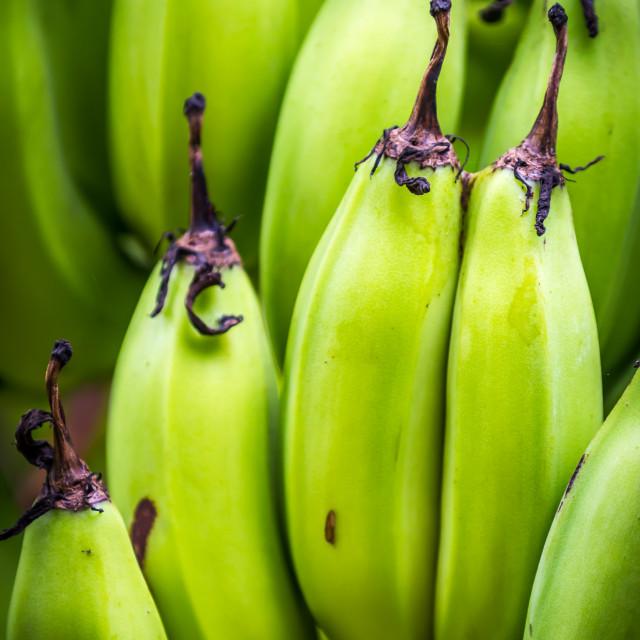 """Green Bananas"" stock image"