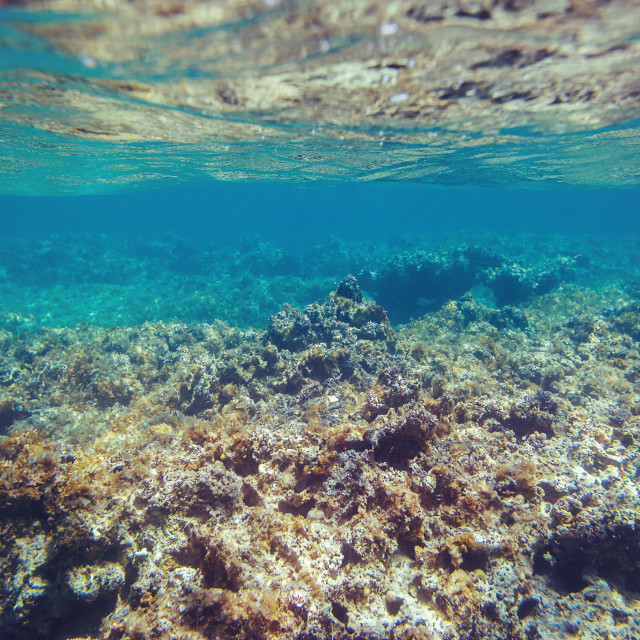 """""""Underwater coral reef background in Caribbean sea"""" stock image"""