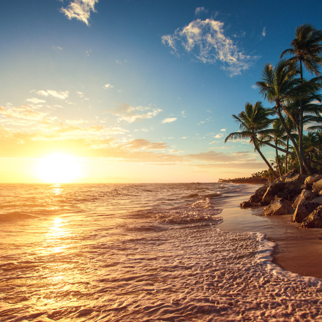 """""""Palm trees on the tropical beach"""" stock image"""