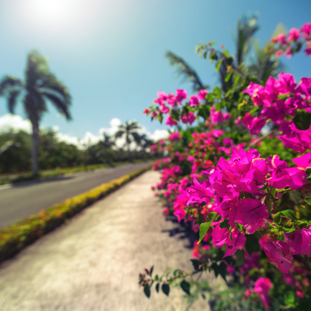 """""""Beautiful alley in the park, caribbean resort with flowers and p"""" stock image"""