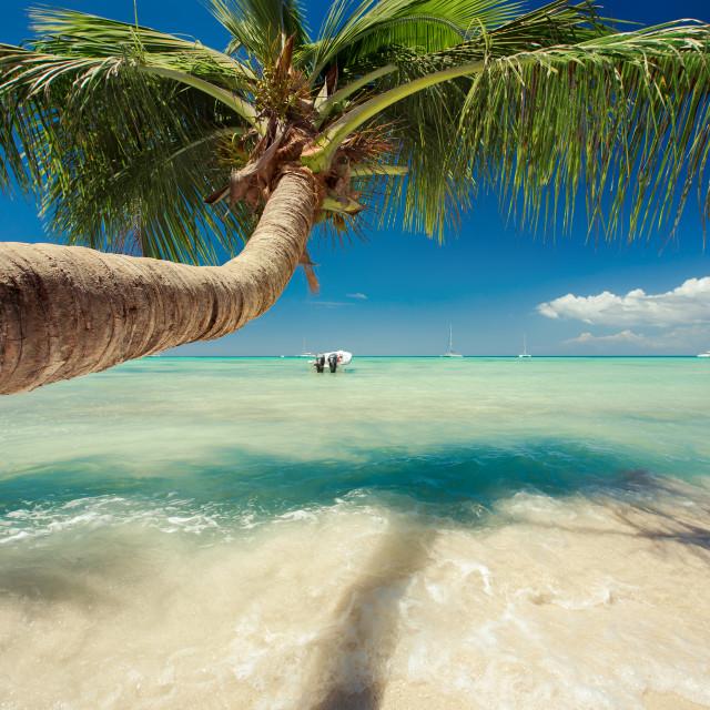 """Beautiful palm tree over caribbean sea"" stock image"