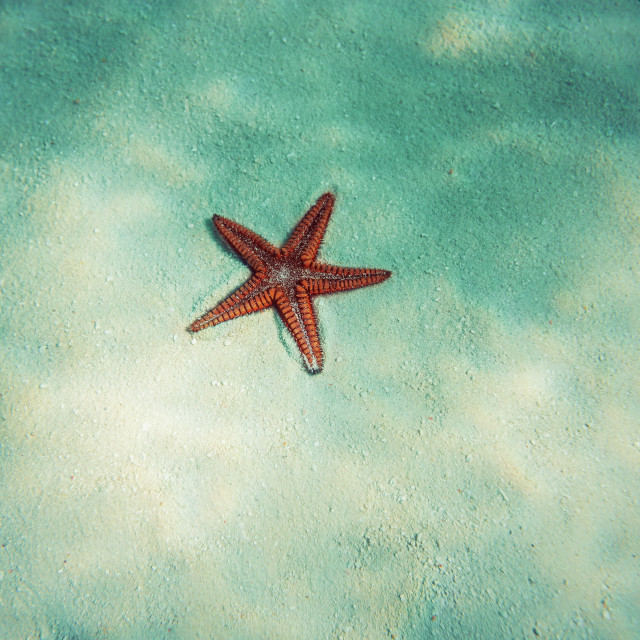 """""""Starfish in blue water with light reflection"""" stock image"""