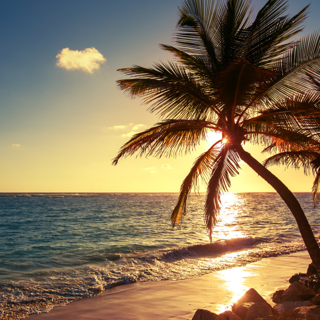"""Palm tree on the tropical beach"" stock image"
