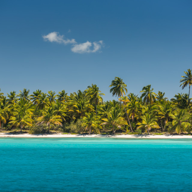 """Palm trees on the tropical beach"" stock image"