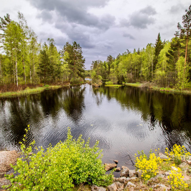 """""""Lake surrounded by trees"""" stock image"""
