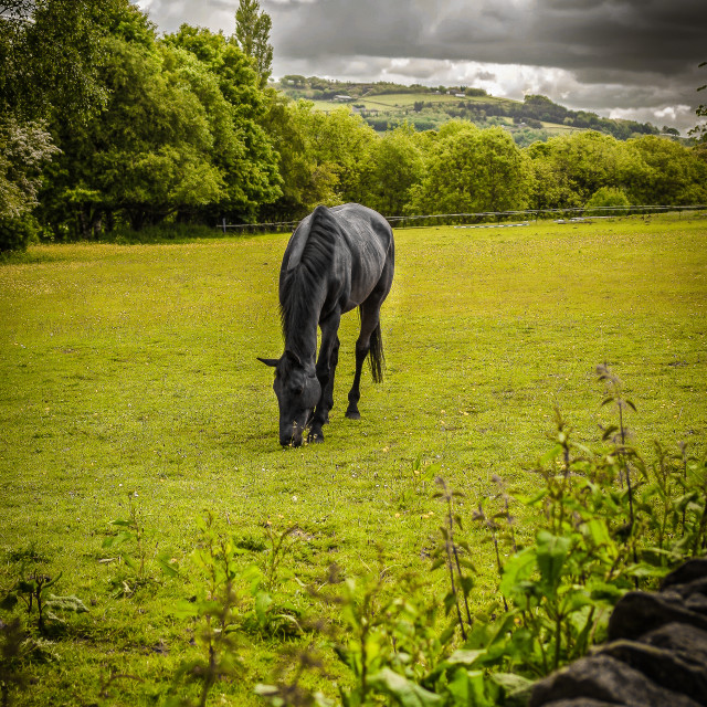 """Horse and Landscape"" stock image"