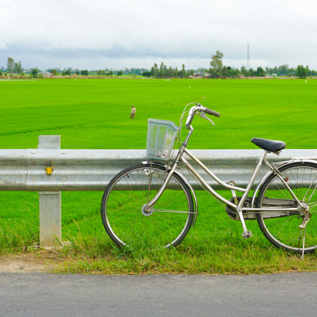 """""""Bicycle on the paddy rice field in Mekong Delta"""" stock image"""