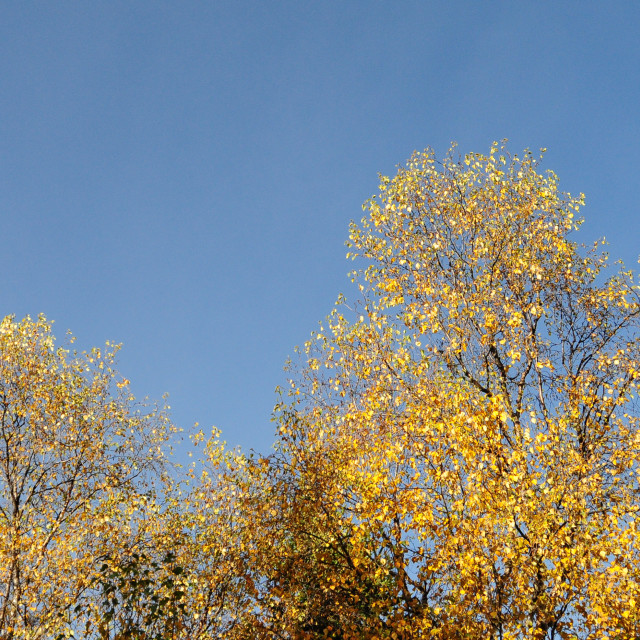 """""""Autumn trees in the valley at Jiuzhaigou"""" stock image"""
