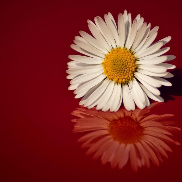 """""""The little flower"""" stock image"""