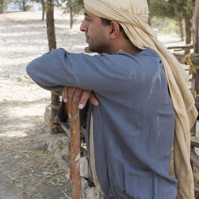 """""""Palestinian shepherd"""" stock image"""