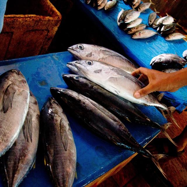 """The Fishmonger"" stock image"