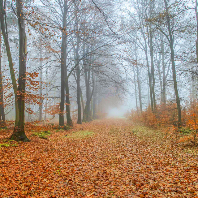 """""""Footpath in fall forest"""" stock image"""