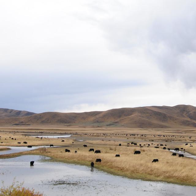 """""""Beautiful scenery of Hongyuan Grassland, China"""" stock image"""
