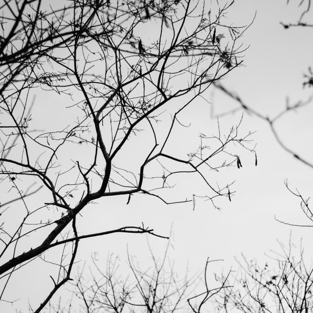 """Dead Tree"" stock image"