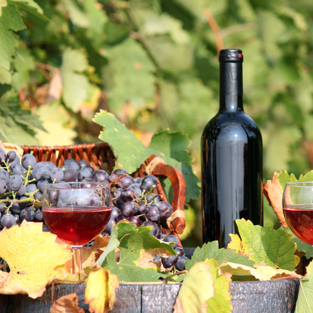 """red wine"" stock image"