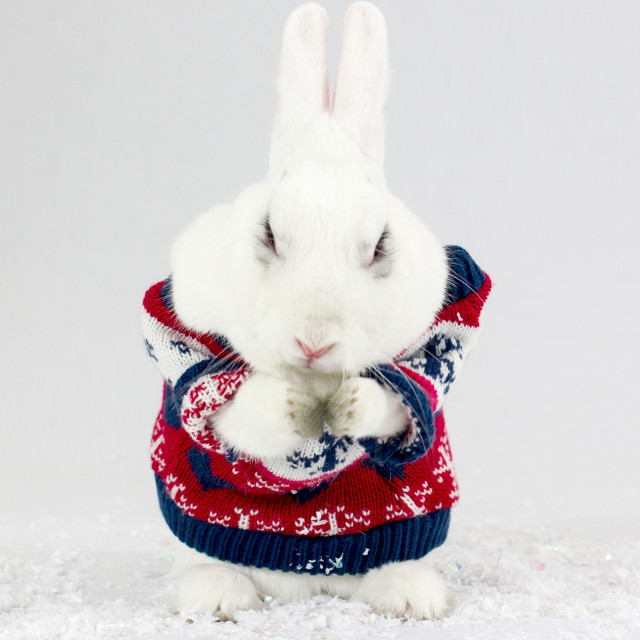"""Christmas Bunny Rabbit"" stock image"