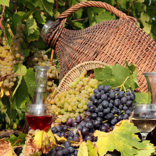 """vineyard red and white wine"" stock image"