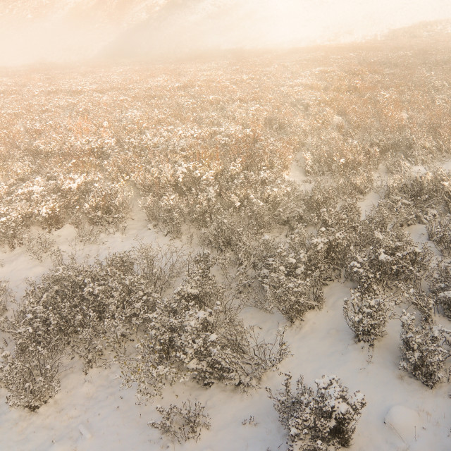 """Winter trees on snow white background"" stock image"