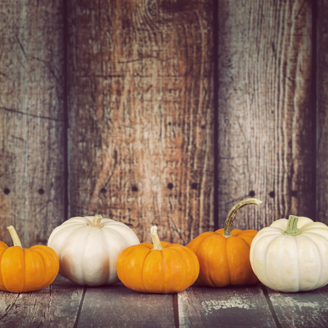 """Mini pumpkins in a row against rustic wooden background"" stock image"