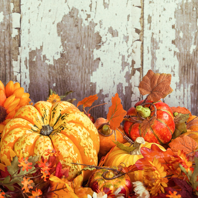 """Autumn display with a squash and decorative gourds and flowers"" stock image"