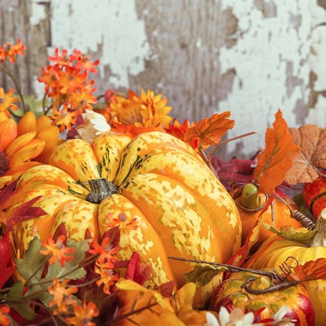 """Autumn display with a squash surrounded by decorative gourds and"" stock image"