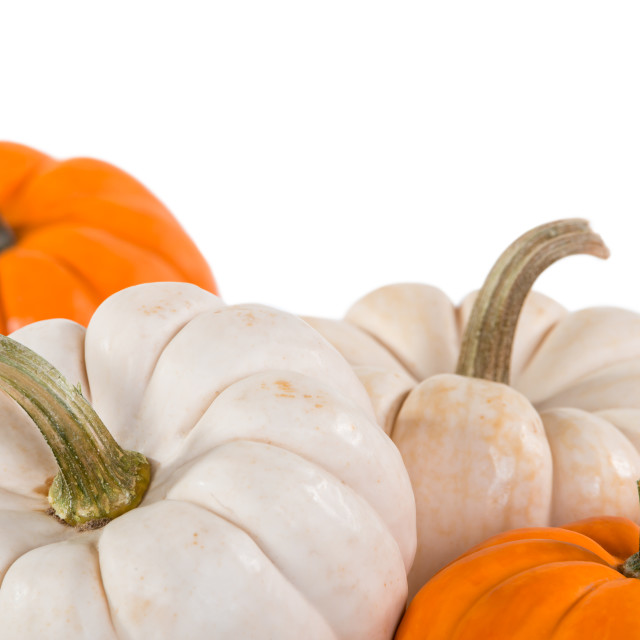 """Closeup of mini pumpkins on white"" stock image"