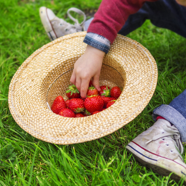 """child eating strawberries"" stock image"