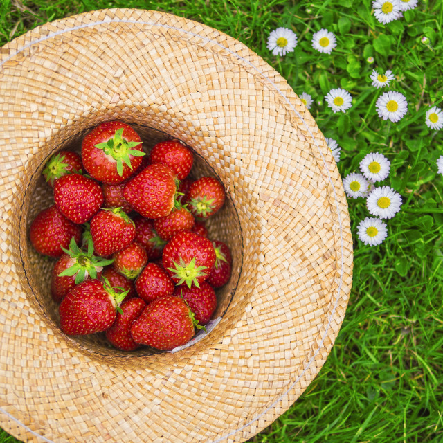 """strawberries in a hat"" stock image"