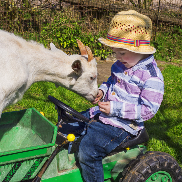 """little farm kid and goat"" stock image"