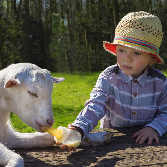 """little boy and little goat"" stock image"