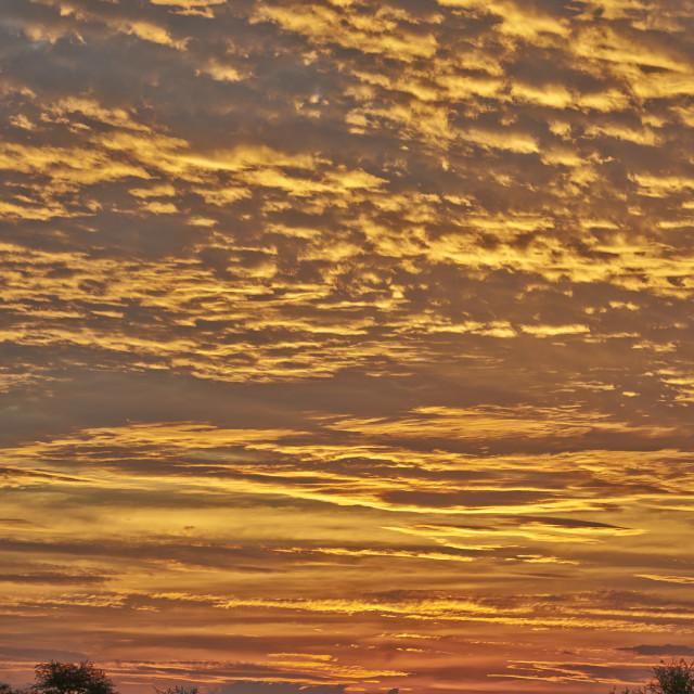"""sunset in Central Kalahari Game Reserve"" stock image"