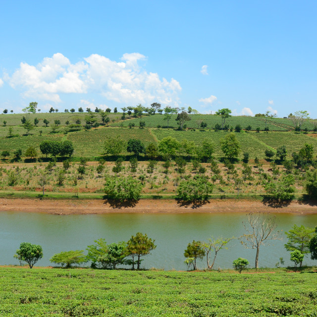 """Tea farm at Bao Loc highland"" stock image"