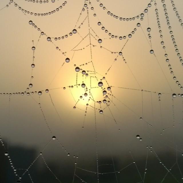 """patterned web"" stock image"