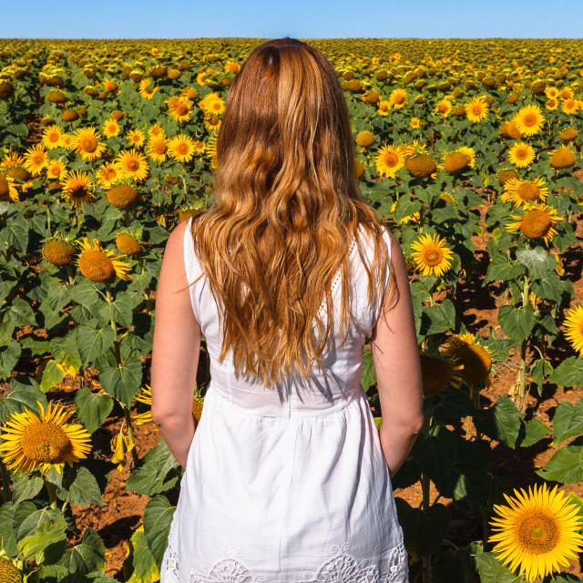 """Sunflowers time"" stock image"