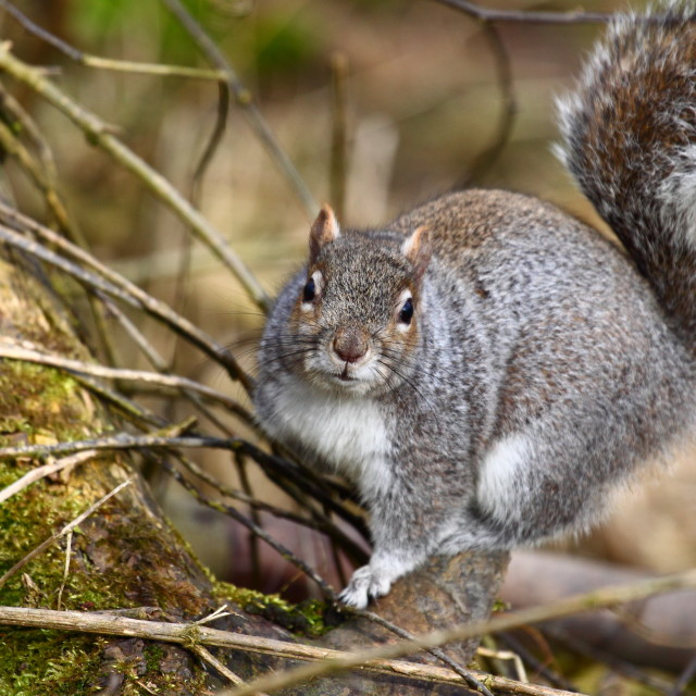 """""""Squirrel on a tree"""" stock image"""