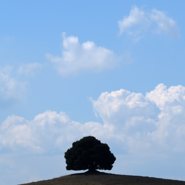 """Solitary tree"" stock image"