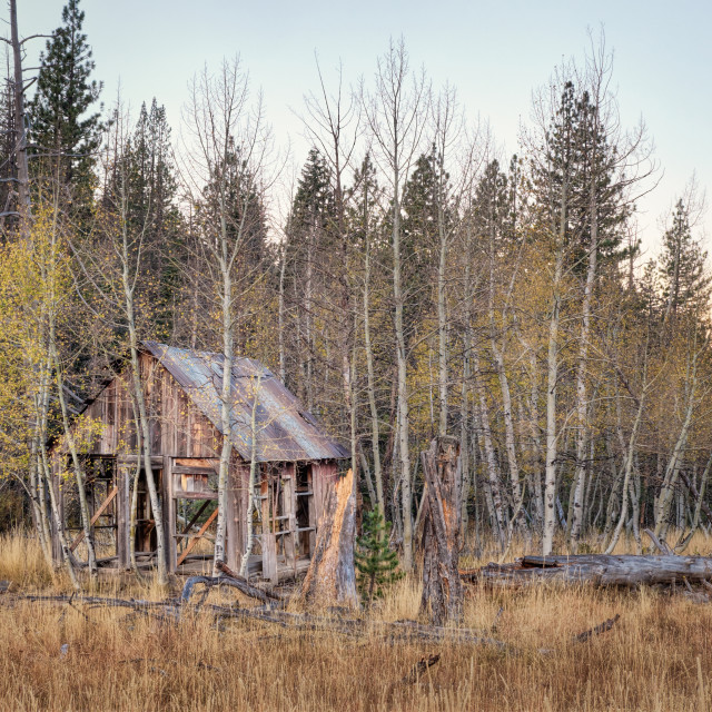 """""""Old Abandoned Cabin in the Woods"""" stock image"""