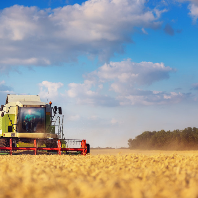 """""""Working Harvesting Combine in the Field of Wheat"""" stock image"""