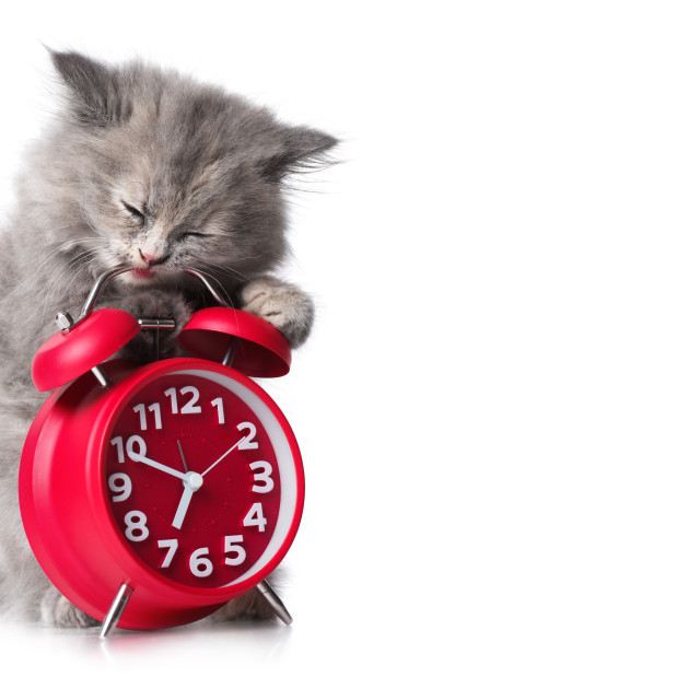 """Adorable kitten with red alarm-clock isolated copyspace"" stock image"