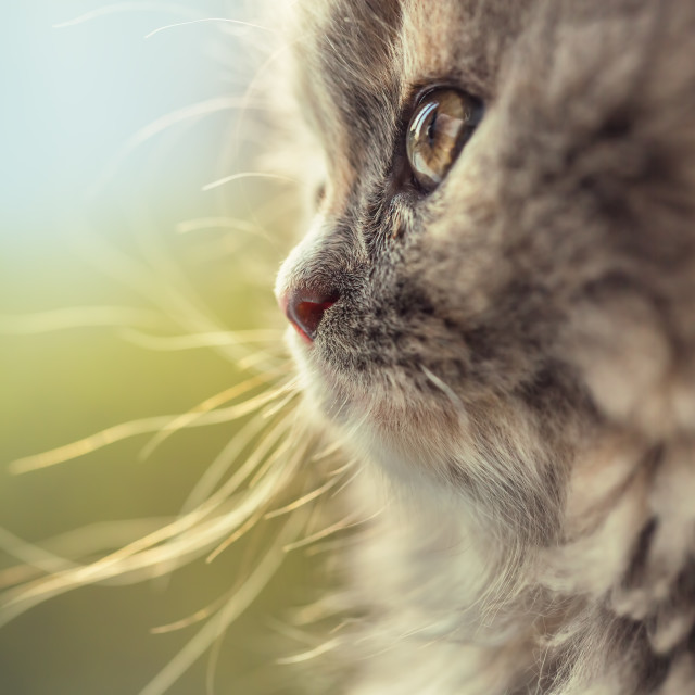 """Portrait of adorable little cat defocused"" stock image"