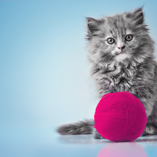 """Cute kitten playing with pink ball of wool studio isolated"" stock image"