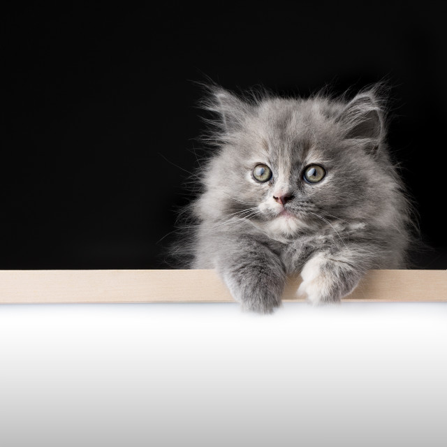 """Cat isolated behind signboard"" stock image"
