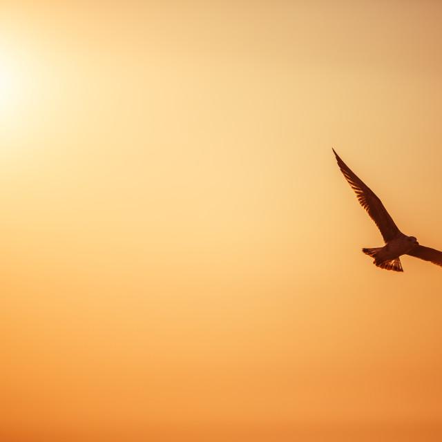 """""""Sunrise over sea"""" stock image"""