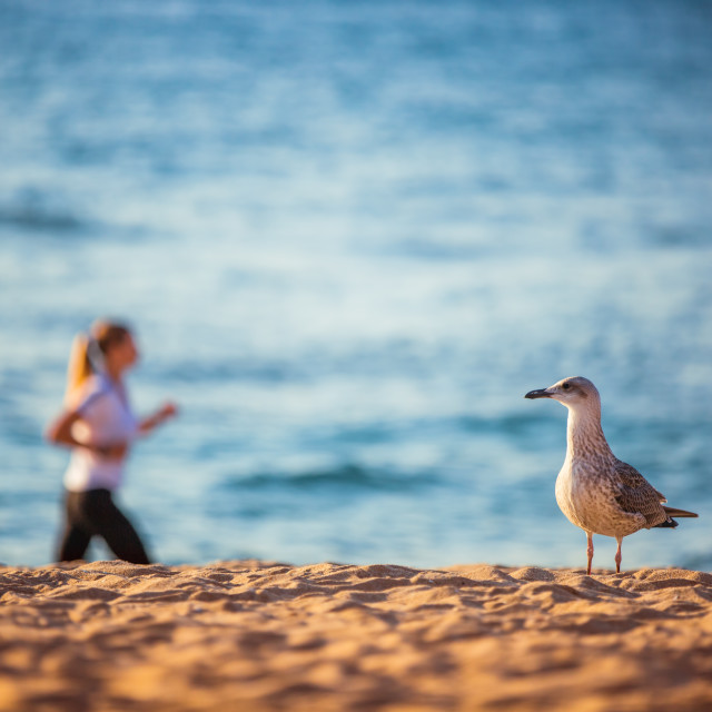 """""""Seagull and woman running on the beach at sunrise"""" stock image"""