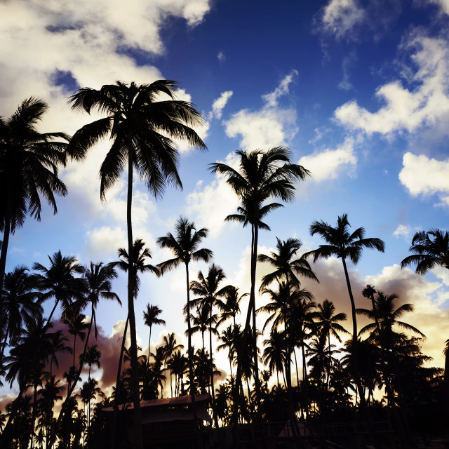 """""""Coconut palm trees perspective view"""" stock image"""