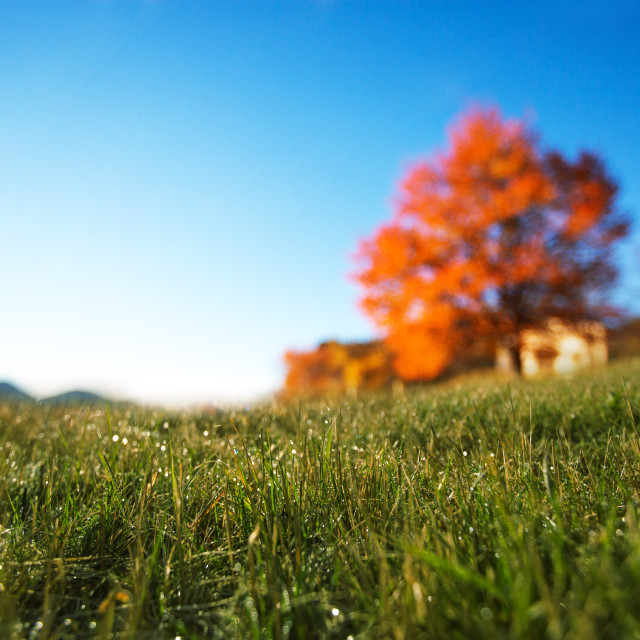 """Autumn field"" stock image"