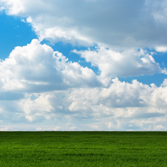 """Green grass and and cloudy sky"" stock image"